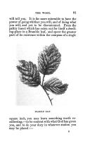 第 81 頁
