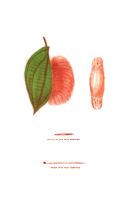 第 civ 頁